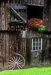 Old Vermont Barn with red impatiens flowers in the barn door.