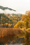 Idaho, Bonners Ferry.  Willows reflecting in the water in the fall at the Kootenai National Wildlife Refuge