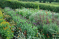 Calendula, Papaver somniferum (Opium Poppies) and Pictorial Meadow Mix