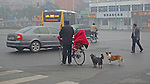 man with child on bicycle and 2 dogs negotiate crossing a Beijing intersection on a smoggy morning