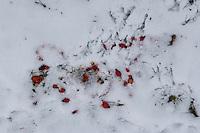 """Naturkunst im Winter, mit roten Hagebutten, Hagebutte das Wort """"rot"""" in den Schnee geschrieben, Naturkunst ist per se vergänglich, hier hat ein Vogel die Hagebutten aufgepickt und angefressen"""
