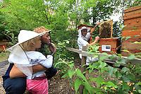 Heinz Risse, 48 ans ouvre une ruche d'abeilles de type particulier dîte Warré au jardin de  Prinzessinnengärten devant un jeune enfant et son père./// Heinz Risse, 48 years old, in the Prinzessinnengärten opening a hive of bees of a particular type called Warré in front of a young child and his father.