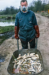Dead trout on the  River Kennet in one of Britain's worst ever incidents of river poisoning which killed more than three million fish.<br /> Scientists from the Agency say carryed out door-to-door enquiries at farms and businesses around the village of Little Bedwyn, Wiltshire, <br /> It is thought contaminants entered the river near the village and spread downriver to the Berkshire Trout Farm, near Hungerford, wiping out its entire stock of more than 150 tonnes of trout .<br /> The Environment Agency's area manager Stu Darby said: &quot;This is one of the largest incidents of its type in the region to date