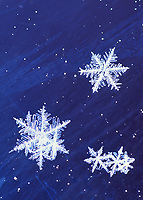 DIGITALLY MODIFIED IMAGE: (a few of the broken snowflake dendrites have been digitally repaired in this image)  Snowflakes on glass, Delta Junction, Alaska