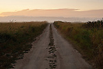 Sunrise with dirt road leading to a distant horizon