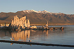 Mono Lake and gulls in morning