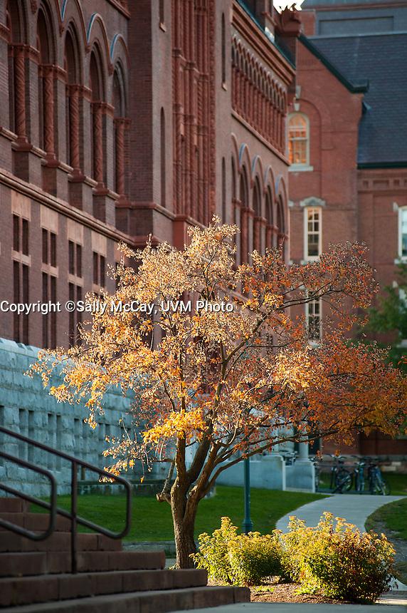 Fall Foliage outside Billings Library, Fall UVM Campus