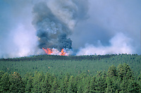 &quot;Leroux Fire&quot; burns through forest of ponderosa pine and mixed conifers in Coconino National Forest, Arizona, AGPix_0165.