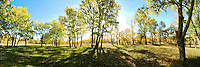 Colorful panoramic landscape photography of countryside woodland surrounded by breathtaking autumn trees with morning sunlight and shadow. This photo was taken in Xinjiang Province, China. Outdoor landscape fine art photography by Paul Chong.