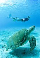 Julie Mozieka snorkeling with a large Green Sea Turtle<br /> Leinster Bay, St. John<br /> Virgin Islands National Park