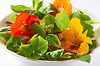 Fresh nasturtium flowers &amp; leaves in a salad