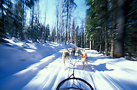 Dogsledding, .near Wells Gray Provincial Park,.British Columbia, Canada
