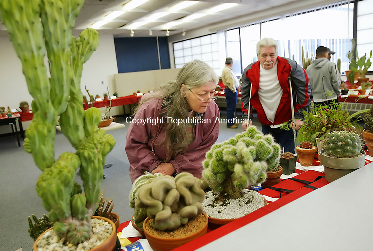 WATERBURY, CT 4/01/07- 040107BZ04- Paula and Craig Hill, of Waterbury, browse the displays at the 24th annual Connecticut Cactus and Succulent Society Show and Sale at Naugatuck Valley Community College in Waterbury Sunday.<br /> Jamison C. Bazinet Republican-American
