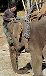 A mahout playing with his Asian elephant (elephas maximus) during the Elephant Asia festival held in Hongsa, Laos.