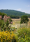 A flower garden frames the view from the parking area at Jefferson Vineyards.
