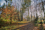 Woodland in winter with fallen leaves and sunlight
