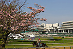 Spring blossoms and a morning run at Churchill Downs, home of the Kentucky Derby in Louisville, Kentucky.