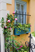 Home landscaping with climbing pink roses, pretty windowbox next to window with marigolds and geranium foliage, garden gate of wrought iron, house wall, herbs