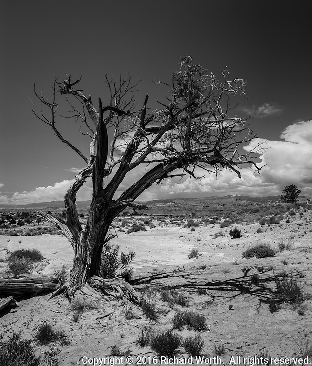 Tangled branches of a desert tree in black and white along I-70 in central Utah.