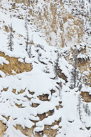 Winter scenes in Yellowstone National Park
