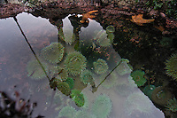 A hiker reflected in a tidepool - Shi Shi Beach - Olympic National Park - Washington State