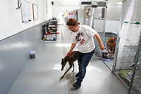 A volunteers leads a greyhound out of the runs at Greyhound Pets, Inc. in Woodinville, WA a couple days after their arrival from a cross country journey that originally began in Florida, on June 21, 2015.