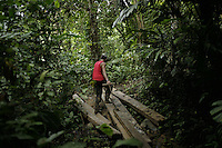 Small-scale logging, long a part of life in rural Indonesia, is now illegal. With few other options, many loggers continue on.<br />