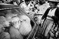Chupaca, Peru, January 27, 2007 - Grandmother, Zedora Oseda, right, laughs with her daughter, Esperanza Sonario, as Sonario's husband, Marco, tries to fit all of his sheep into their Toyota hatchback. The family left with 27 sheep in and on top of the car. The animal market is a staple of the region, where families come to buy and sell chickens, sheep, pigs, cows, and goats, as well as those who slaughter the animals and sell of individual parts.