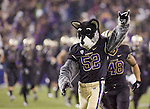Washington Huskies mascot leads the team onto the field before kickoff against Oregon State Beavers at CenturyLink Field in Seattle, Washington on October 27, 2012.  The Huskies upset the 7th ranked Beavers 20-17.  ©2012. Jim Bryant Photo. ALL RIGHTS RESERVED.