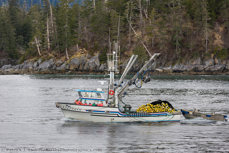 Commercial fishing boat during the Sitka Sound Herring Sac Roe fishery.