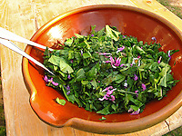 Kräuter - bzw. Wildgemüse - Salat, Kräutersalat im Frühjahr, als Zutaten Gänseblümchen, Löwenzahn, Taubnessel - Blüten u.a.m.