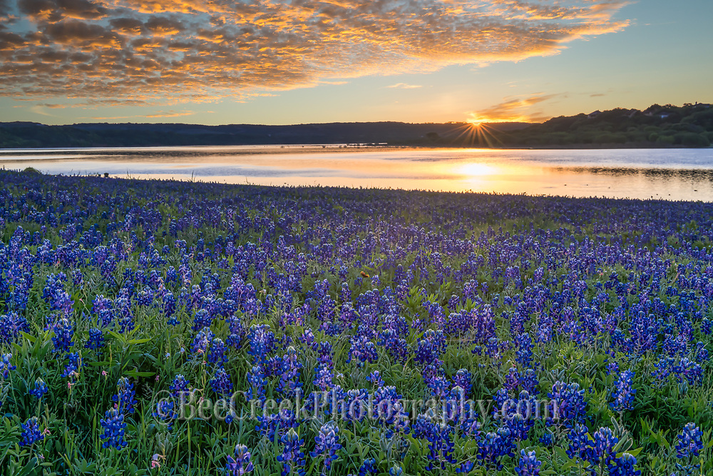 This was taken at the lake as the sunrise cast this golden glow over the clouds and lake with the bluebonnet landscape. Springtime in the Texas hill country is my favorite time because of all the wildflowers everywhere, especially when you come across a big field of bluebonnets it can magical landscape.