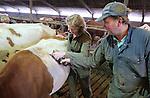Foto: VidiPhoto<br /> <br /> DODEWAARD - Bij de eerste melkveehouders is de koeienkapsalon weer geopend. Melkveehouder Jan-Willem van Rooijen scheert woensdag samen met zijn hulp Corn&eacute; van Mourik de eerste koeien. Omdat de dieren vanaf zaterdag de hele winter op stal staan, moet hun warme jas uit. Bovendien is het korte kapsel een stuk hygi&euml;nischer dan een harig model. Mooi geschoren is niet lelijk. Terwijl de meeste boeren een koeienkapper inhuren, doet Van Rooijen het liever zelf. &quot;Het is leuk werk en bovendien bespaar ik hiermee zo'n 1000 euro.&quot; Van Rooijen heeft 140 melkoeien en het laten scheren kost ongeveer 7 euro per koe. Het scheren van de hele veestapel kost ongeveer vier werkdagen. Daarom doen Jan-Willem en Corn&eacute; dat tussen de boerenbedrijven door. Foto: Boerin Gerdi van Rooijen scheert haar eerste koe, de lakenvelder Cato. Jan-Willem geeft aanwijzingen.