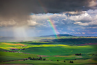 The Palouse, Whitman County, WA: Dramatic rain clouds and rainbow over the rolling wheat fileds of the Palouse