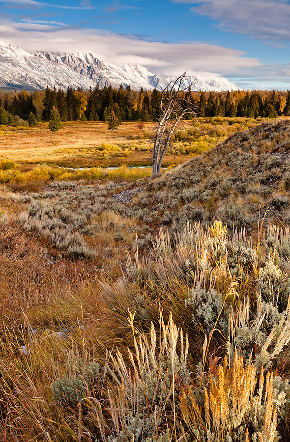 Morning light hits the stalks of sagebrush with a single dead tree in the midground.