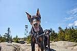 Doberman and Black Lab on the summit of Lyon Mt