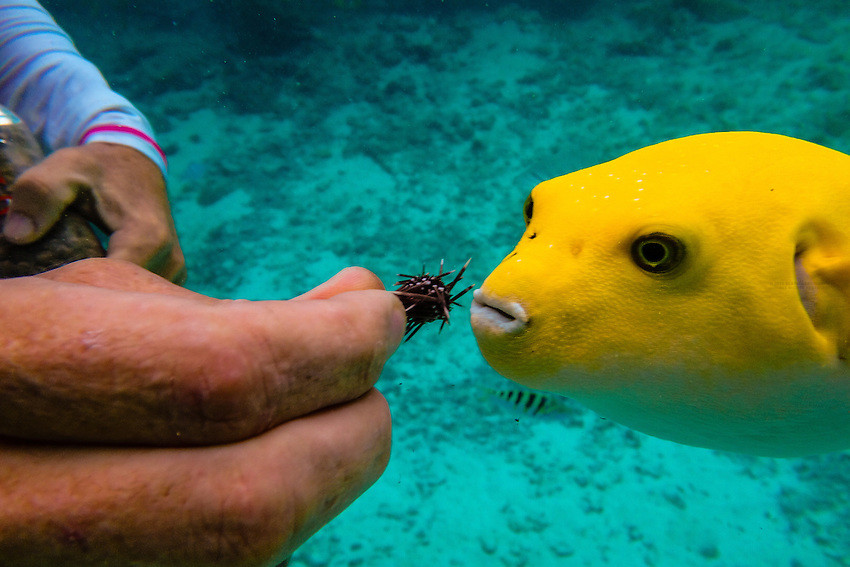 A marine biologist feeds a fish underwater in a lagoon at for Bora bora fish