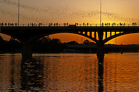 People on the Congress Avenue Bridge in Austin watching mexican free-tail bats take flight. Every evening from March to early November 1.5 million bats emerge from their roosts under the bridge.