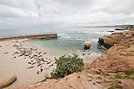 Harbor seals lay below the seawall on the children's pool beach in La Jolla, California.