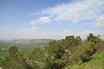 Mount Tabor forest