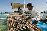 Nautilus hunters prepare their traps made of bamboo and uses pufferfish meat as bait.
