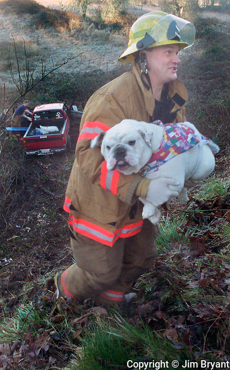 A South Kitsap District 7 firefight carries a 50-pound English Bulldog up an embankment after his owner lost control of his truck. Jim Bryant Photo