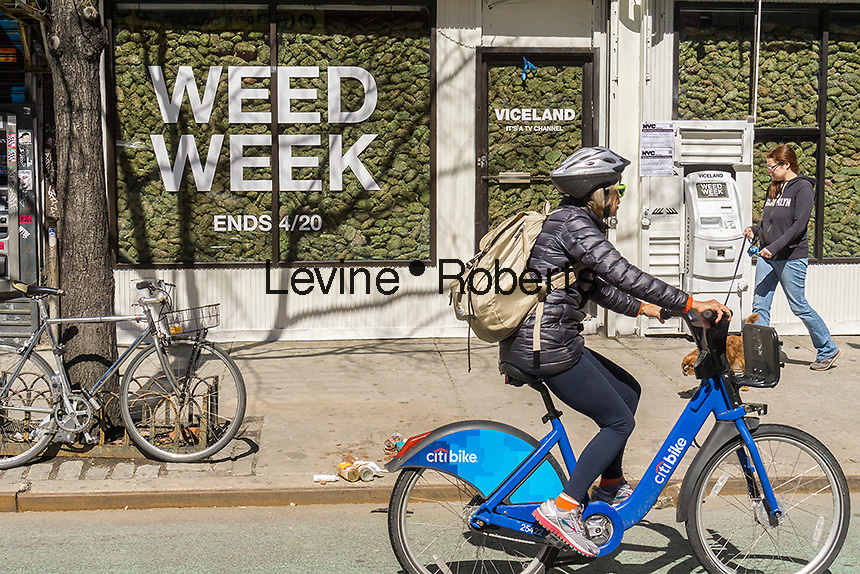 """Two storefronts in the Lower East Side neighborhood of New York are filled with """"faux"""" marijuana on Wednesday, March 29, 2017 as a promotion for the so-called """"Weed Week"""" programming on the Viceland television channel. The celebration of all things marijuana takes place on the Viceland cable channel from April 17-20. April 20 is known as 420 in cannabis culture and is a holiday for smoking marijuana, especially at 4:20 AM or PM. (© Richard B. Levine)"""