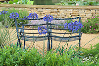 Metal garden two-seater bench in front of water garden with waterlilies, with blue Agapanthus flowers, rear view of chairs