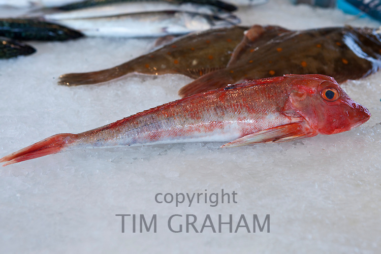 Freshly-caught red fish, Grondin, on sale at food market at La Reole in Bordeaux region of France
