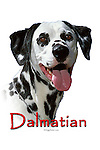 Dalmatian This design is offered on gift merchandise ONLY.<br />