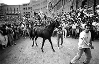 &copy; Francesco Cito / Panos Pictures..Siena, Tuscany, Italy. The Palio. ..Joyful supporters greet the winning horse...Twice each summer, the Piazza del Campo in the medieval Tuscan town of Siena is transformed into a dirt racetrack for Il Palio, the most passionately contested horse race in the world. The race, which lasts just 90 seconds, has become intrinsic to the town's heritage since it was first run in 1597.