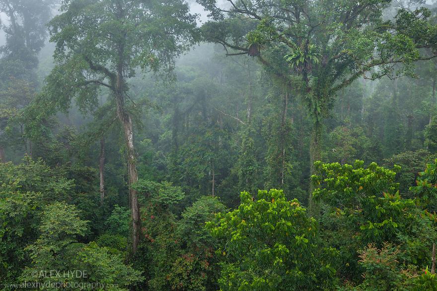 Rainforest Canopy : www.imgarcade.com - Online Image Arcade!