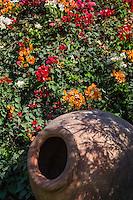Lima, Peru.  Bougainvillea and Large Peruvian Pot, Gardens of the Larco Museum (Museo Larco).
