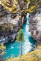 Athabasca River, Slot Canyon, Jasper National Park